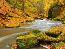与下落的叶子的大冰砾 秋天山河岸 石渣和新鲜的绿色生苔冰砾在银行有五颜六色的叶子的 免版税库存照片
