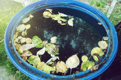 与下落的叶子的大海坦克在庭院里 库存照片