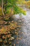 与下落的叶子的小小河在秋天时间之前 库存图片