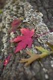 与下落的叶子的抽象五颜六色的秋天背景以绿色, 图库摄影