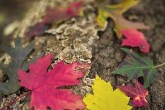 与下落的叶子的抽象五颜六色的秋天背景以绿色, 库存图片