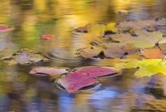 与下落的叶子的秋季构成在水坑 库存图片