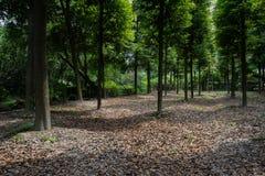 与下落的叶子的被遮蔽的地面在夏天森林 免版税库存图片