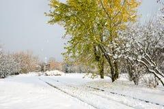 与下落的叶子的赤栎树在雪 库存图片