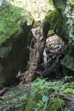 与下落的日志的大岩石 免版税库存图片