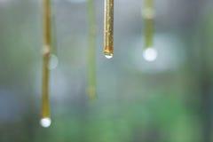 与下落的树枝在雨,宏观背景以后 免版税库存图片