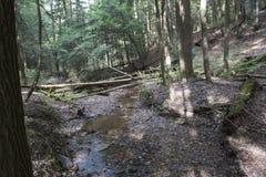 与下落的树的小河,灰洞,俄亥俄 免版税库存图片