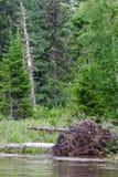 与下落的树的风景 克拉斯诺亚尔斯克地区河,俄罗斯 图库摄影