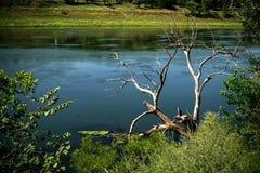 与下落的树的风景 库存照片