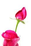 与下落的桃红色玫瑰和瓣在玻璃 图库摄影