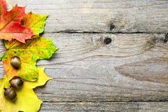 与下落的槭树叶子和橡子的秋天背景 免版税库存照片