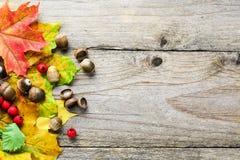 与下落的槭树叶子和橡子的秋天背景 免版税图库摄影