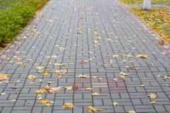 与下落的槭树叶子的足迹 免版税库存照片