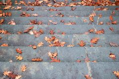 与下落的秋叶的宽广的石楼梯 库存图片