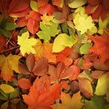 与下落的秋叶的背景图象 免版税库存图片