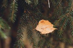 与下落的秋天叶子的被定调子的背景 免版税库存图片
