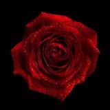 与下落的红色玫瑰 免版税库存照片