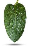 与下落的绿色叶子 图库摄影