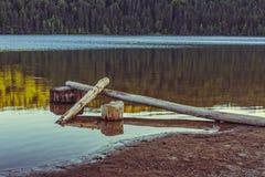 与下落的被剥皮的树的湖风景 免版税图库摄影