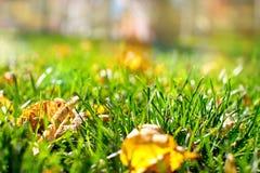 与下落的黄色叶子的绿草 未聚焦的背景 免版税库存图片