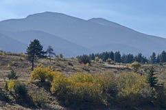 与不同地树的山风景在令人尊敬的秋季森林和沼地, Rila山里 库存照片
