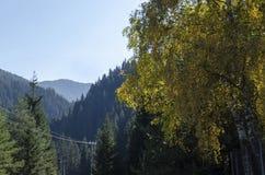 与不同地树的山风景在令人尊敬的秋季森林和沼地, Rila山里 免版税库存照片