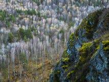 与不同的颜色草的美丽的岩石在岩石的 免版税库存图片