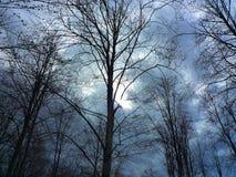 与不生叶的树的森林细节在春天在日落的一个多云晚上 库存照片