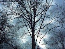 与不生叶的树的森林细节在春天在日落的一个多云晚上 免版税库存图片