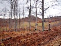 与不生叶的白色吠声的森林细节在春天分支在一个多云早晨 免版税库存图片