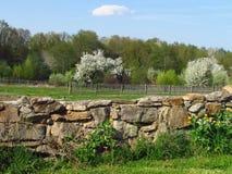 与与一棵石墙和开花的樱桃树的春天美好的乡下风景在一个绿色草甸边缘 库存照片