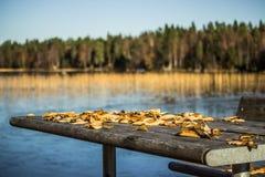 与与叶子的表在秋天 免版税库存图片
