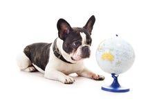 与世界地图的狗 免版税库存照片