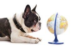 与世界地图的狗 库存图片