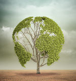 与世界地图的结构树在沙漠 免版税库存照片