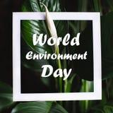 与世界环境日文本的方形的框架在绿色植物叶子背景 E 库存图片