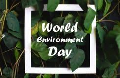与世界环境日文本的方形的框架在绿色植物叶子背景 E 库存照片