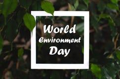 与世界环境日文本的方形的框架在绿色植物叶子背景 r 免版税库存图片