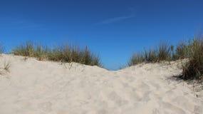 与丛的波儿地克的海边在边疆的草 库存图片
