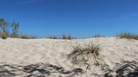 与丛的波儿地克的海边在边疆的草 图库摄影