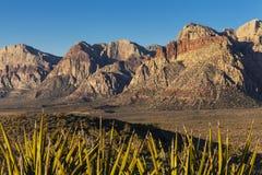 与丝兰的美好的沙漠场面。 图库摄影