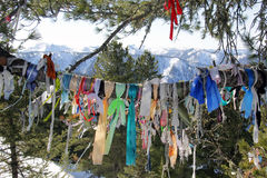 与丝带的树在山 库存照片