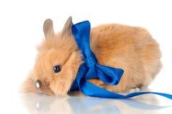 与丝带的逗人喜爱的兔宝宝 免版税图库摄影