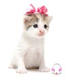 与丝带的逗人喜爱的小猫 免版税图库摄影