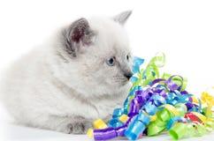 与丝带的逗人喜爱的小猫 免版税库存图片