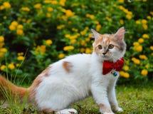 与丝带蝴蝶的逗人喜爱的猫 图库摄影