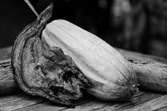 与丝瓜络的干燥snackehead鱼 图库摄影