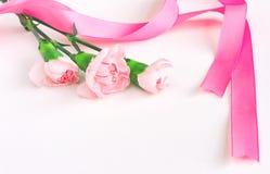 与丝绸丝带的三支桃红色康乃馨 库存图片