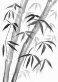 与两三茎的竹子 库存照片