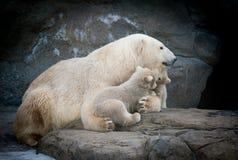 与两个小婴孩的北极熊 库存图片